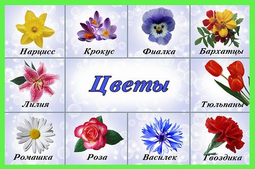 Цветы с названиями цветов на русском 61